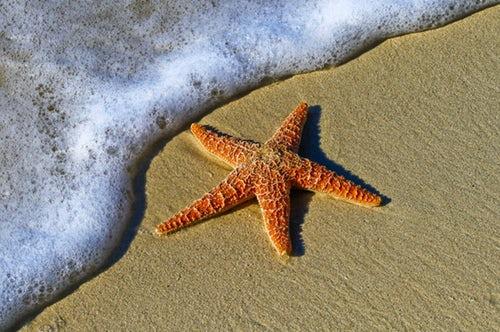 Lue fitness-tähtien neuvot rantakuntoon